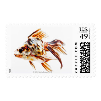 Calico Fantail Comet goldfish Postage