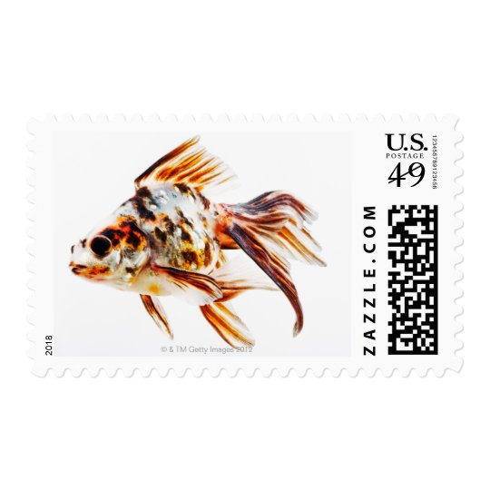 Calico Fantail Comet goldfish Postage