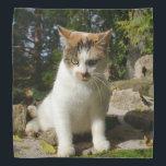 "Calico Kitten Bandana<br><div class=""desc"">A cute calico kitten decorates this lovely bandana</div>"