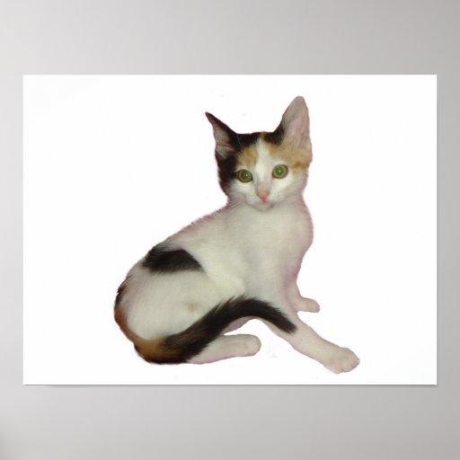 Calico Kitten Cutout Poster