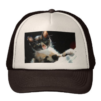 Calico Kitten Hat