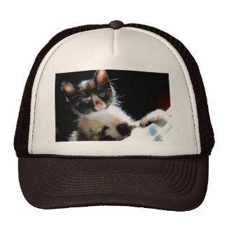 Calico Kitten Hat