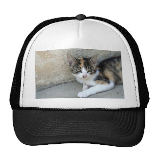 Calico Kitten Trucker Hat