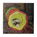 Calico Kitten Napping Ceramic Tile