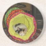 Calico Kitten Napping Coaster
