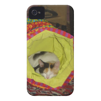 Calico Kitten Napping iPhone 4 Case