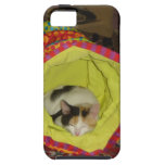 Calico Kitten Napping iPhone 5 Cover