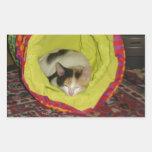 Calico Kitten Napping Rectangular Stickers