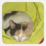 Calico Kitten Napping Square Sticker