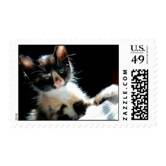 Calico Kitten Postage Stamp
