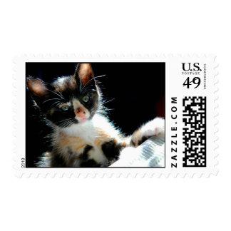 Calico Kitten Postage Stamp
