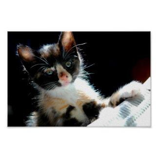 Calico Kitten Poster