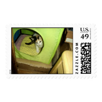 Calico Kitten Stamp