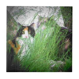 Calico Kitties In the Grass Ceramic Tile