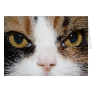 Calico Kitty Card