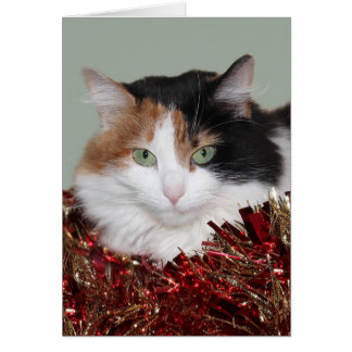Calico kitty Christmas Card