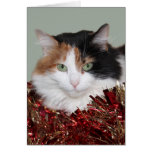 Calico kitty Christmas Greeting Cards