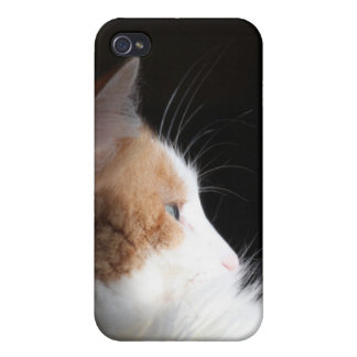 Calico kitty in sunbeam iPhone 4/4S cover