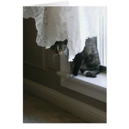 Calico Kitty on the Window Sill, peek-a-boo! Greeting Card
