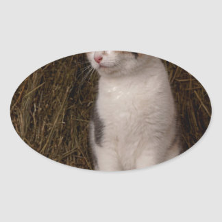 Calico Kitty Oval Sticker