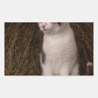 Calico Kitty Rectangular Sticker