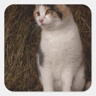 Calico Kitty Square Sticker