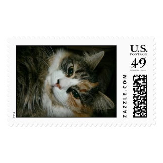 Calico Kitty Stamp