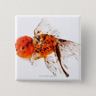 Calico lionhead goldfish (Carassius auratus) Pinback Button