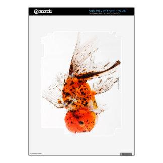 Calico lionhead goldfish (Carassius auratus) Skin For iPad 3