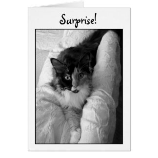 Calico Maine Coon Cat, black & white photo card