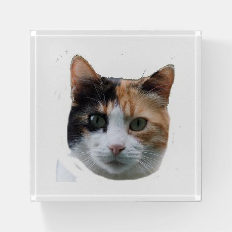 Calico Paperweight