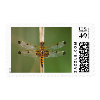 Calico Pennant Postage