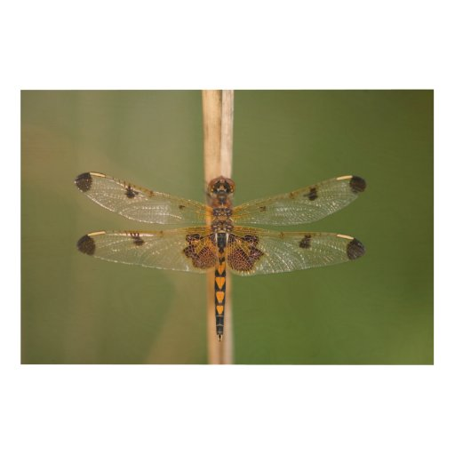 Calico Pennant Wood Canvases