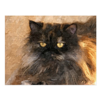Calico Persian Cat Postcard