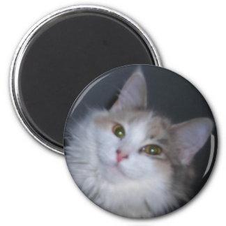 Calico princess magnet