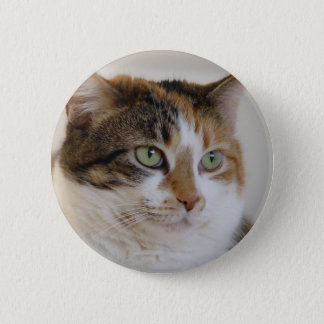 Calico tabby cat face button