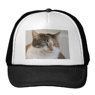 Calico tabby cat face mesh hat