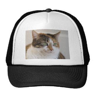 Calico tabby cat face trucker hat