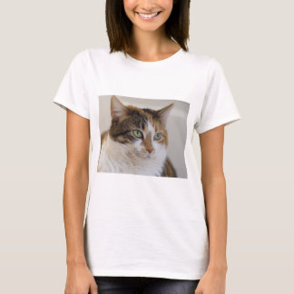 Calico tabby cat face T-Shirt