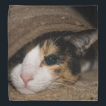 """Calico Taco Bandana<br><div class=""""desc"""">Macy, a young, full blooded Calico cat has climbed under a rug thinking she is hiding, to play. Looking for more prints or products? Feel free to visit my store: http://www.zazzle.com/timelessmomentsphtgy This photo was taken by Jennifer White with Timeless Moments Photography. All images are copyrighted &#169; Timeless Moments Photography/Jennifer White....</div>"""