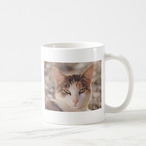 calicó tazas de café
