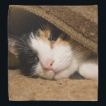 """Calico Under The Rug Bandana<br><div class=""""desc"""">Macy, a young, full blooded Calico cat has climbed under a rug thinking she is hiding, to play. Did you know that only the female Calico&#39;s have all 3 colors (brown, black and White)? Male Calico&#39;s only have black and white. Looking for more prints or products? Feel free to visit...</div>"""