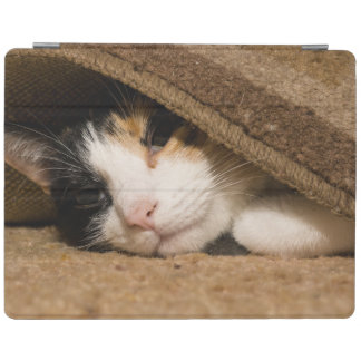 Calico Under The Rug iPad Smart Cover