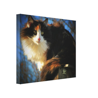 Calico wind canvas print
