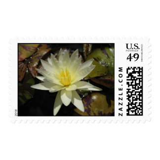 Caliente Postage Stamp