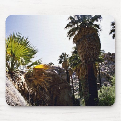 Califonia Fan Palms, Lost Palms Oasis Mouse Pad