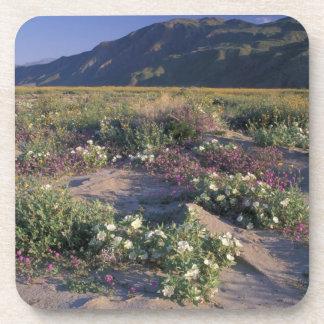 Califorinia, Anza-Borrego Desert SP, Sand Drink Coaster