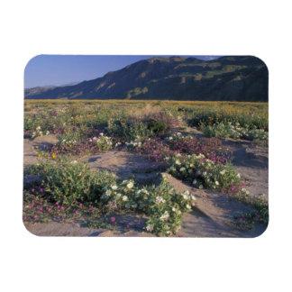 Califorinia, Anza-Borrego Desert SP, Sand Magnet