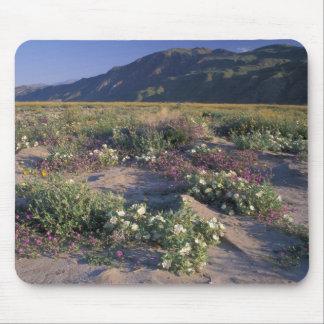 Califorinia, Anza-Borrego Desert SP, Sand Mouse Pads