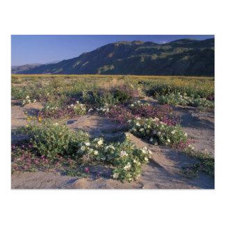 Califorinia, Anza-Borrego Desert SP, Sand Postcard